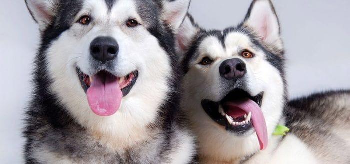 тест про породы собак